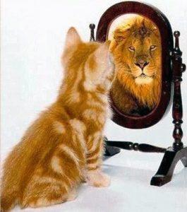 Gatto si specchia e vede riflesso un leone