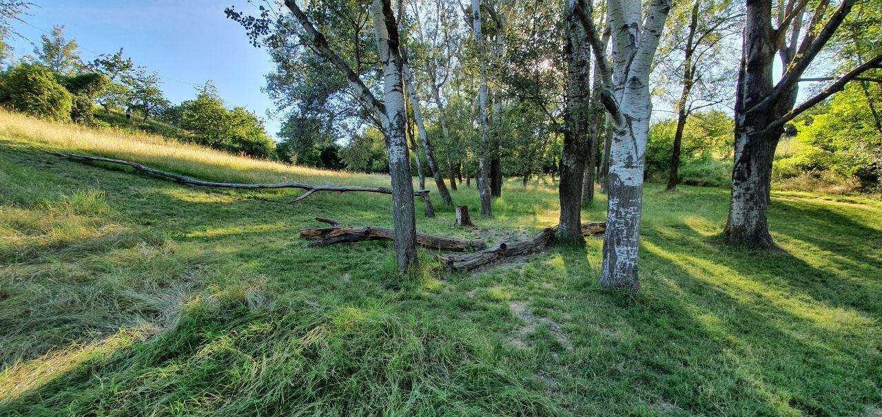 Panoramica di prato e alberi