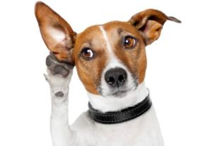cane che mette una mano all'orecchio per sentire meglio
