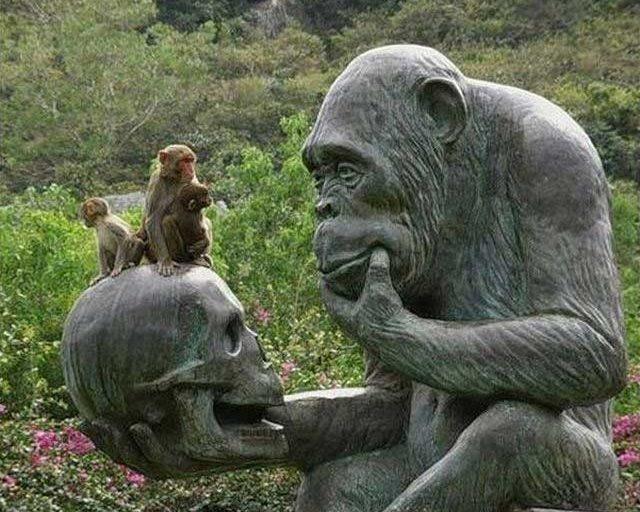 Scimpanzé che recita il monologo teatrale Amleto